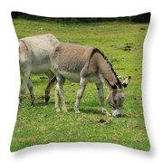 Two Jerusalem Donkeys In A Field Throw Pillow
