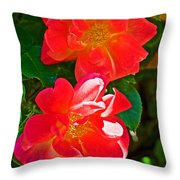 Two Joseph's Coat Roses At Pilgrim Place In Claremont-california Throw Pillow