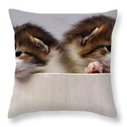 Two Kittens In A Wooden Bucket Throw Pillow