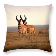 Two Male Pronghorn Antelopes In Alberta Throw Pillow