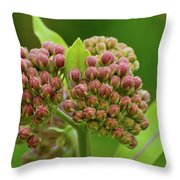 Two Milkweed Flowers Buds  Throw Pillow