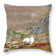 Two Mountain Goats On Mount Bierstadt In The Arapahoe National Fores Throw Pillow