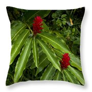Two Red Tropical Flowers Blooming Throw Pillow