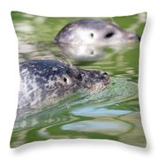 Two Seal Swimming Nature Scene Throw Pillow