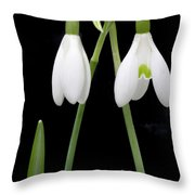 Two Snow Drops Throw Pillow