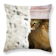 Two Stray Cats Throw Pillow