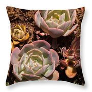 Two Succulents  Throw Pillow