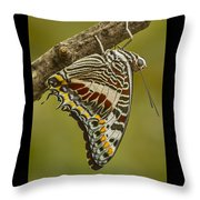 Two Tailed Pasha Butterfly Throw Pillow