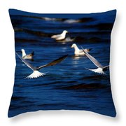 Two Terns A Fly Throw Pillow