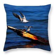 Two Terns A Tango Throw Pillow