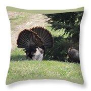 Two Tom Wild Turkeys Sparring To Impress A Hen Throw Pillow
