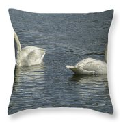 Two Trumpeter Swans At Oxbow Bend Throw Pillow