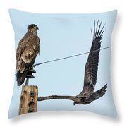 Two Views Of A Juvenile Bald Eagle Throw Pillow