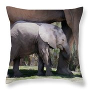 Two Weeks Old Throw Pillow