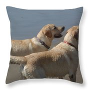 Two Yellow Labs Wait In Anticipation Throw Pillow