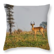 Ugandan Kob Throw Pillow