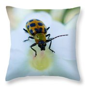 Beauty And The Bug Throw Pillow