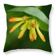 Umbrella Plant Throw Pillow