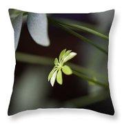Umbrella Plant Throw Pillow