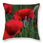 Umbria Poppies Throw Pillow