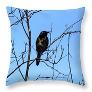 Uncommon Grackle Throw Pillow