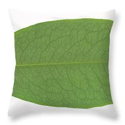 Underside Of A Coca Leaf, Erythroxylon Throw Pillow