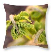 Unfolding Fern Leaf Throw Pillow