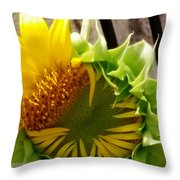 Unfolding Sunflower Throw Pillow