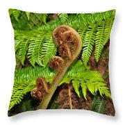 Unfolding Treefern Throw Pillow