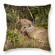 Unita Ground Squirrel Throw Pillow