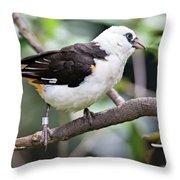 Unknown White Bird On Tree Branch Throw Pillow