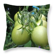 Unripe Cherry Tomatoes  Throw Pillow