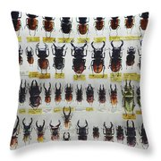 Unusual Pattern Made Out Of Many Stag Beetles Of Different Sizes Throw Pillow