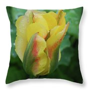 Unusual Yellow Tulip With Dew On The Petals Throw Pillow