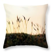 Unuusual Sunset I Throw Pillow