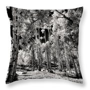 Up Among The Aspens Throw Pillow