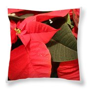 Up Close And Personal Poinsettia  Throw Pillow