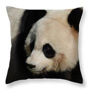 Up Close With A Gorgeous Giant Panda Bear Throw Pillow
