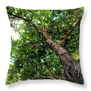Up The Tree Throw Pillow