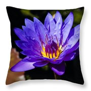 Upbeat Violet Elegance - The Beauty Of Waterlilies  Throw Pillow