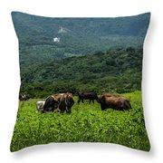 Vacas De Ahuachapan Throw Pillow