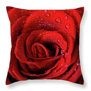Valentine Swirl Throw Pillow by Tracy Hall