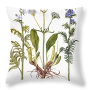 Valerian Flowers, 1613 Throw Pillow