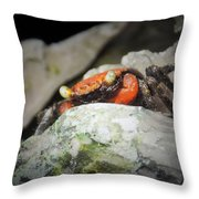 Vampire Crab Throw Pillow