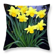 Vancouver Daffodils Throw Pillow