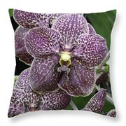 Vanda Orchids Throw Pillow