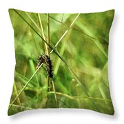 Vanessa Atalanta Red Admiral Butterfly Larvae Throw Pillow
