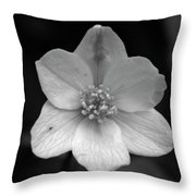 Vanishing Beauty 3 Throw Pillow