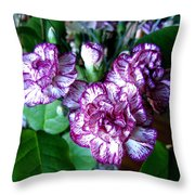 Variegated Carnations Throw Pillow