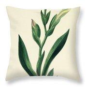 Variegated Iris Throw Pillow